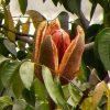 Sky-Fruit-600×473